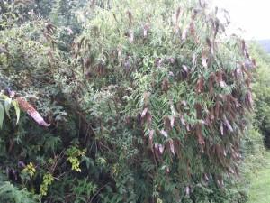 Postal: Una planta muy frondosa