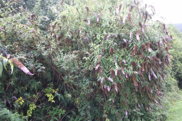 Una planta muy frondosa