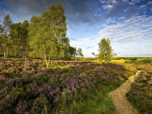 Un bonito campo con árboles y plantas aromáticas