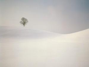 Postal: Árbol solitario en la nieve