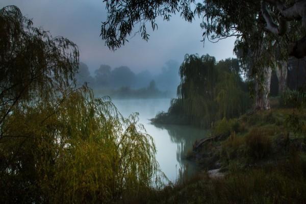 Niebla sobre la vegetación del lago