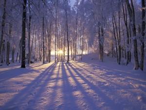 Postal: Atardecer en un bosque en invierno