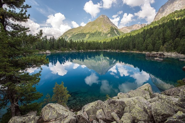 Árboles y rocas rodeando el lago
