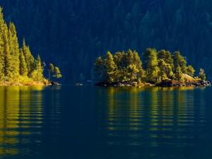 Postal: El sol iluminando a los árboles del lago