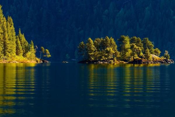 El sol iluminando a los árboles del lago