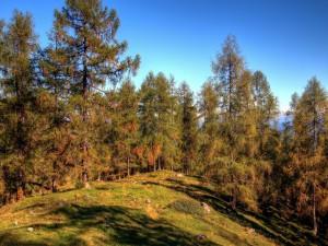 Postal: Grandes árboles bajo un cielo azul