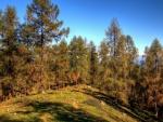 Grandes árboles bajo un cielo azul