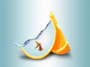 Pez en una naranja cortada