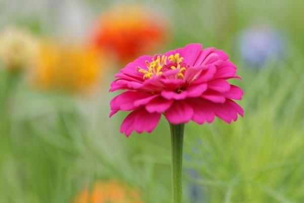 Hermosa flor con pétalos color fucsia