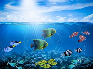 Postal: Vistosos peces de colores en el fondo del mar