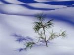 Pino creciendo en la nieve