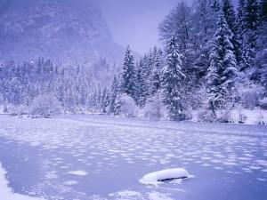 Nieve y hielo sobre el río y los árboles