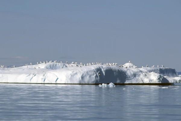 Gaviotas posadas en una superficie helada