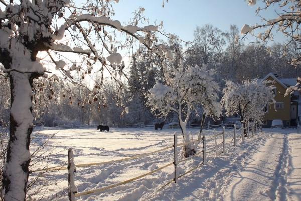 Caballos negros en la nieve