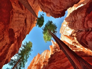 Árboles de gran altura dentro de un cañón