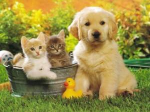 Lindo perrito junto a dos gatos pequeños