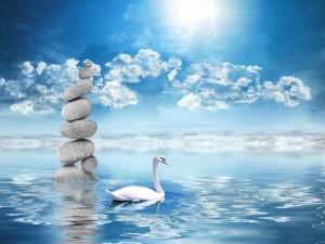 Delicado cisne junto a unos guijarros en el agua