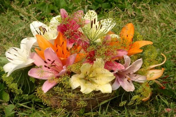 Lirios de varios colores en una cesta sobre la hierba