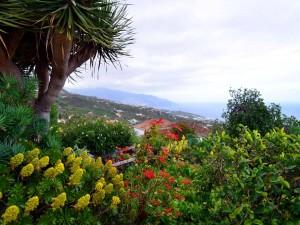 Postal: La Palma, Islas Canarias