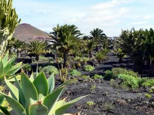 """Postal: Jardines de la """"Fundación César Manrique"""" Lanzarote (Islas Canarias)"""