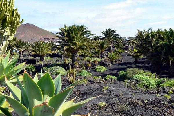 """Jardines de la """"Fundación César Manrique"""" Lanzarote (Islas Canarias)"""