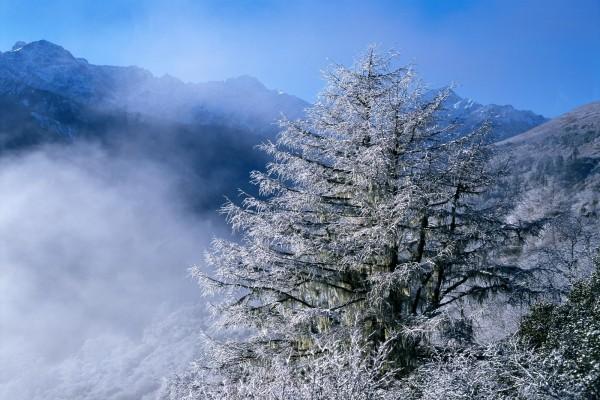 Niebla entre los árboles nevados