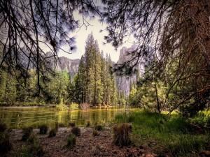 Postal: Plantas y árboles a orillas del río