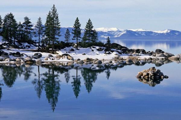 Pinos verdes y nieve junto al lago
