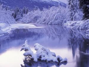 Nieve en los árboles y arbustos de la orilla del río