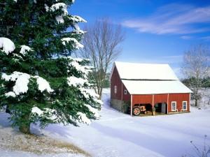 Pino verde junto a la casa cubierta de nieve