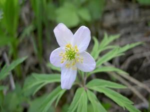 Postal: Una bella y delicada flor blanca