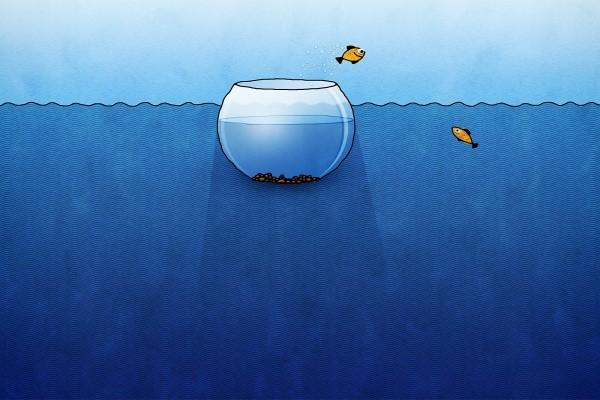 Peces jugando en la pecera del mar