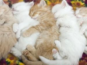 Postal: Gatos durmiendo uno al lado del otro