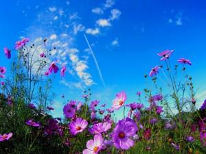 Postal: Espléndidas flores color lila en el campo