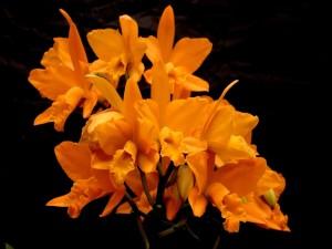 Postal: Elegantes orquídeas color naranja