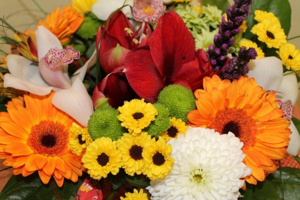 Elegantes flores de diversos colores