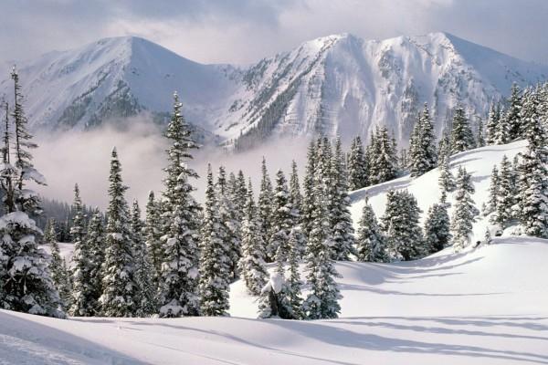 Nubes entre los pinos y las montañas nevadas