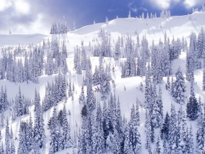 Ladera de una montaña cubierta de pinos y nieve