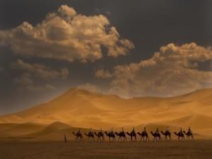 Paseo en camello por el desierto