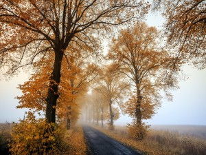 Postal: Niebla en la carretera junto a unos árboles otoñales