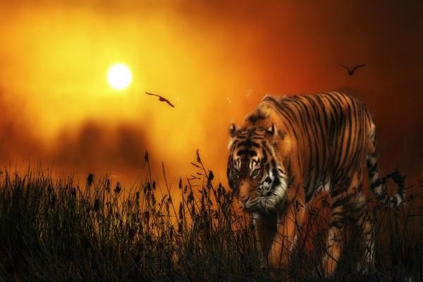 Un tigre y pájaros bajo los rayos del sol