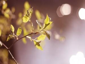 Postal: Una ramita con tiernas hojas