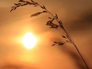 El sol ilumina una frágil espiga