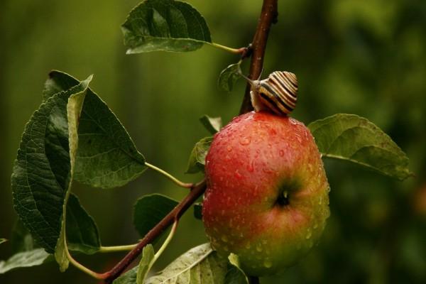 Un caracol sobre una manzana con pequeñas gotitas de agua