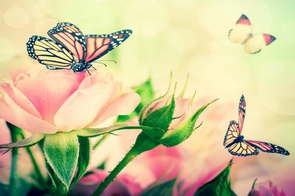 Las mariposas revolotean sobre unas rosas
