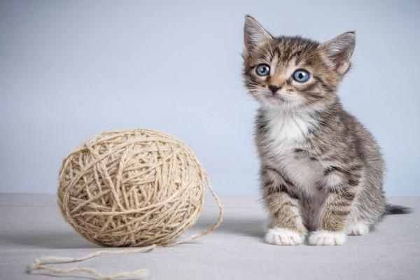 Un gatito junto a un ovillo