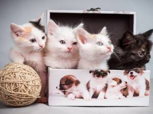 Postal: Tres gatitos dentro de una caja y uno fuera con un ovillo