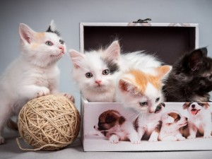 Gatitos jugando con un ovillo y una caja