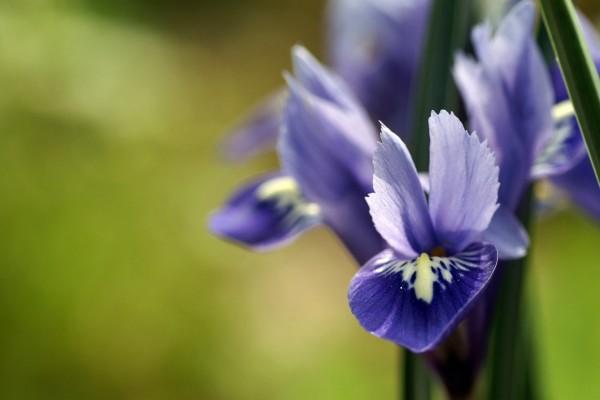 Flores con pétalos de color púrpura