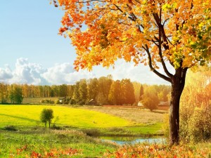 Los cálidos rayos del sol iluminan el paisaje otoñal